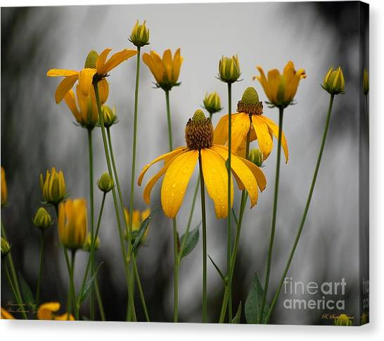 Flowers In The Rain Canvas Print