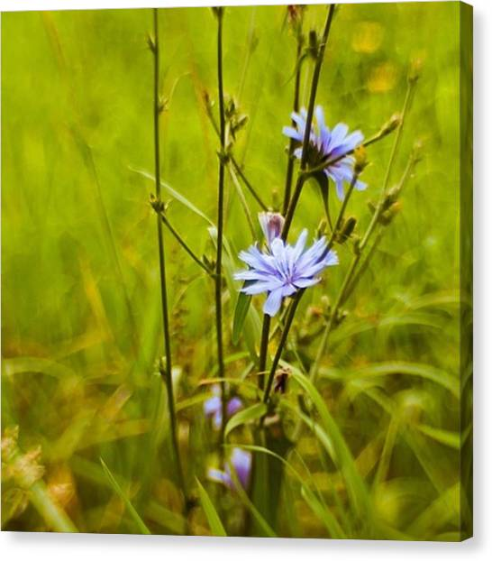 Green Canvas Print - #flowers #lensbaby #composerpro by Mandy Tabatt