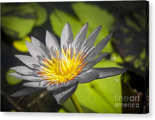 Flowers Of Grey Canvas Print