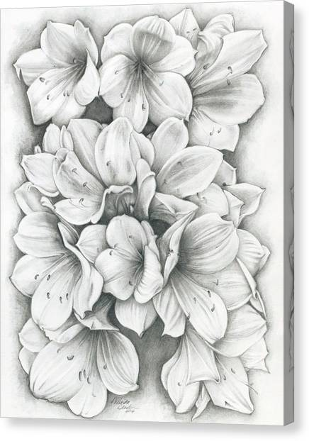 Clivia Flowers Pencil Canvas Print