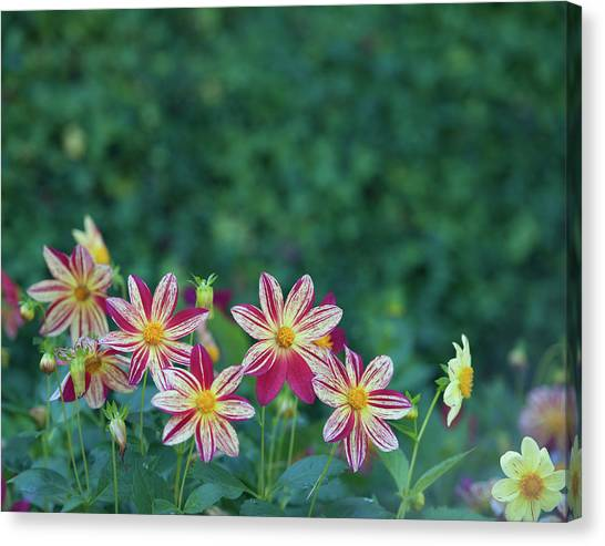 Canvas Print - Flowers  by Shawn Hamilton