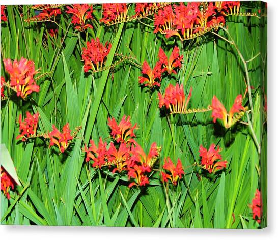 Flowers Singing Canvas Print by Mel Crist