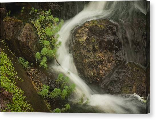 Canvas Print featuring the photograph Flowing Stream by David Coblitz