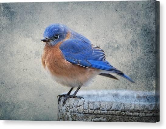 Bluebirds Canvas Print - Fluffy Bluebird by Bonnie Barry