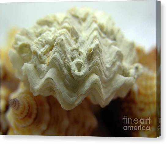 Canvas Print featuring the photograph Fluted Clam Shell by Patti Whitten
