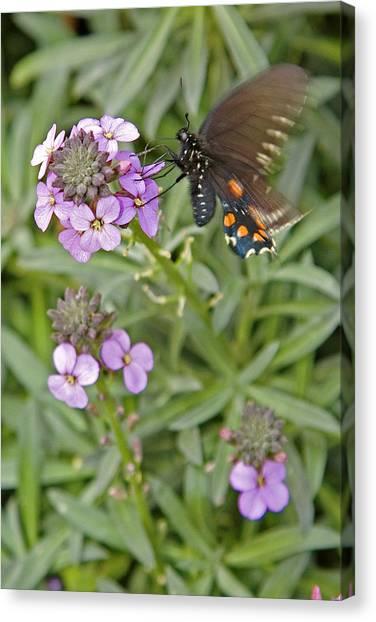 Fluttering Canvas Print by Charlie Osborn