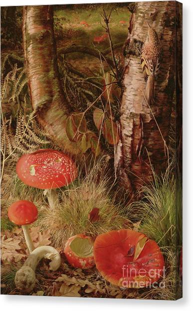 Shrooms Canvas Print - Fly Agarics by Raymond Booth