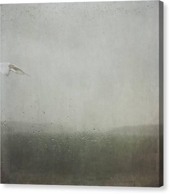 Fly Between The Raindrops Canvas Print