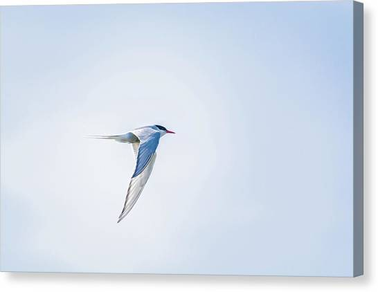 Fly-by Canvas Print by Emily Bristor