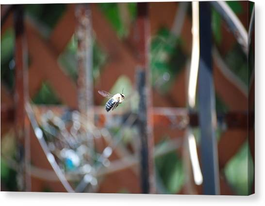 Fly By Canvas Print by Peter  McIntosh