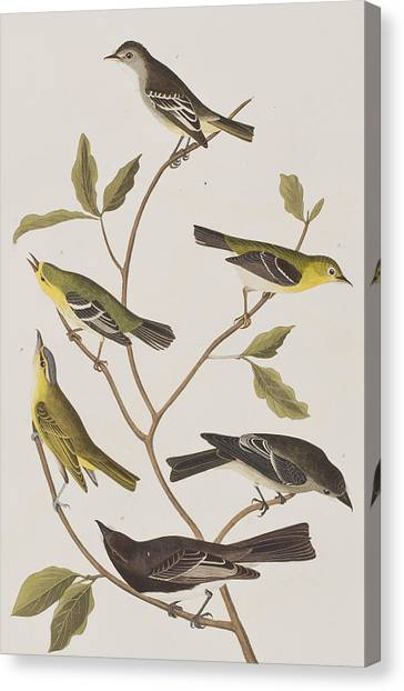 Flycatchers Canvas Print - Fly Catchers by John James Audubon