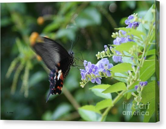 Fly In Butterfly Canvas Print