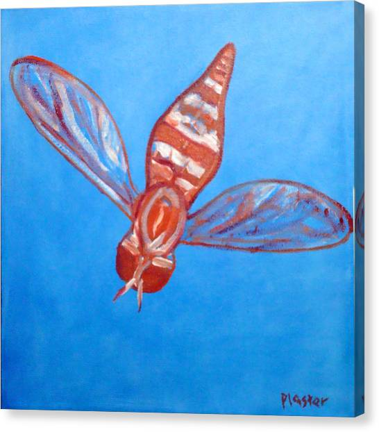 Fly South Canvas Print by Scott Plaster