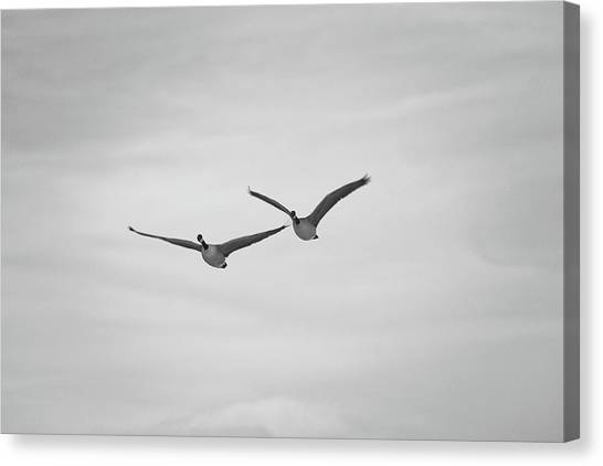 Flying Companions Canvas Print