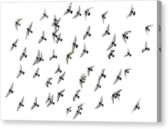Flying Formation Canvas Print by Hans Kool