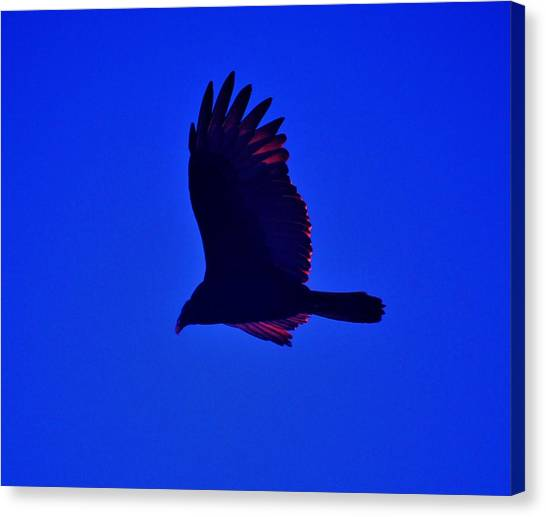 Flying High Canvas Print by Helen Carson