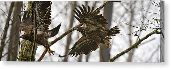 Flying In The Woods Pe002 Canvas Print by Yoshiki Nakamura