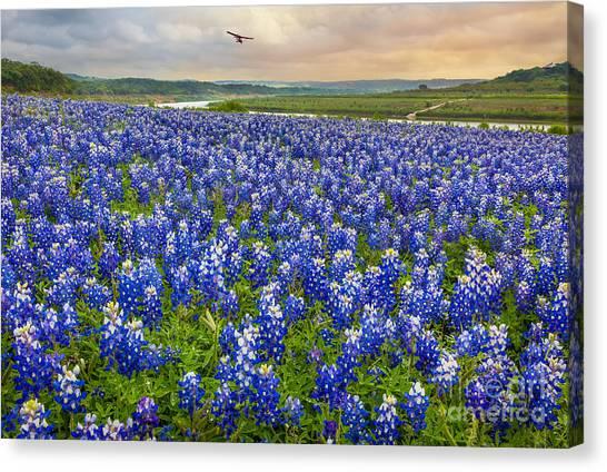 Colorado River Canvas Print - Bluebonnet Fields Forever by Inge Johnsson