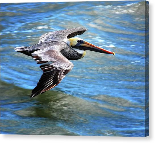 Canvas Print - Flying Pelican by Peg Runyan