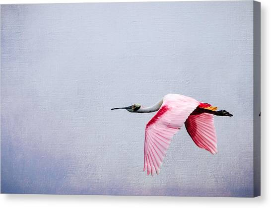 Flying Pretty - Roseate Spoonbill Canvas Print