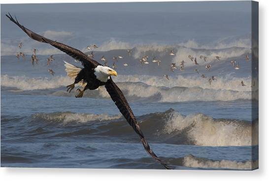 Eagle In Flight Canvas Print - Flying Through The Surf by Angie Vogel