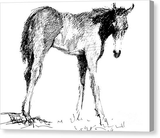 Foal In Black And White Canvas Print