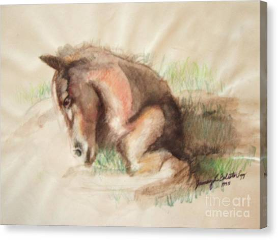 Foal Canvas Print by Jamey Balester