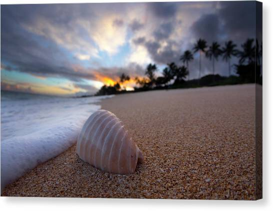 Beach Sunrises Canvas Print - Foam Shell Surprise by Sean Davey