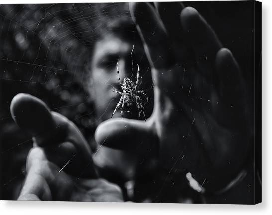 Bug Canvas Print - Focus by Mario Pejakovic