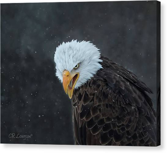 Focused Canvas Print