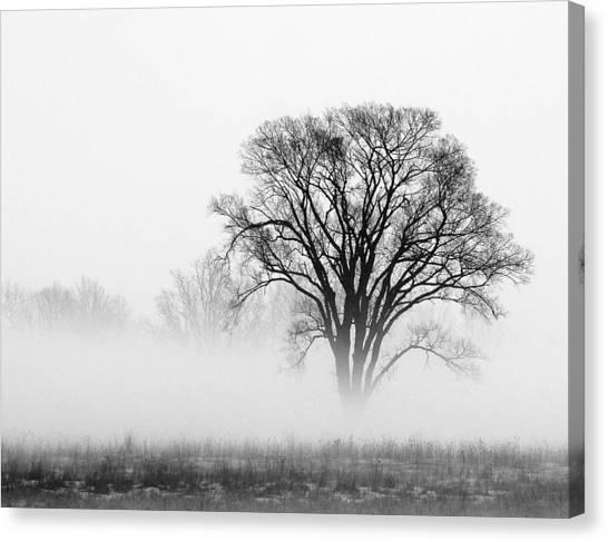 Fog Canvas Print by Elizabeth Reynders