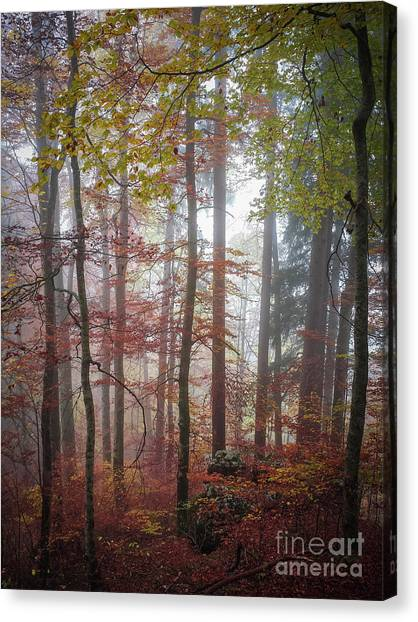 Fallen Tree Canvas Print - Fog In Autumn Forest by Elena Elisseeva