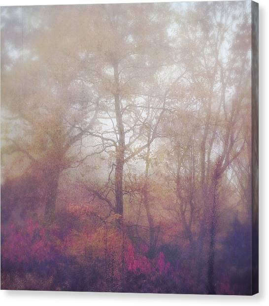 Fog In Autumn Mountain Woods Canvas Print