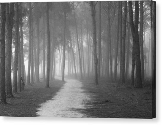 Fog In The Forest Canvas Print by Gary Bydlo