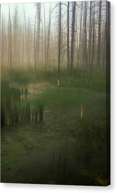 Fog In The Marsh Canvas Print