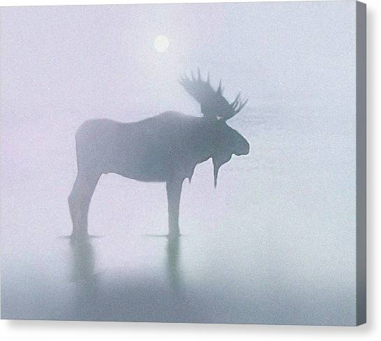 Bulls Canvas Print - Fog Moose by Robert Foster