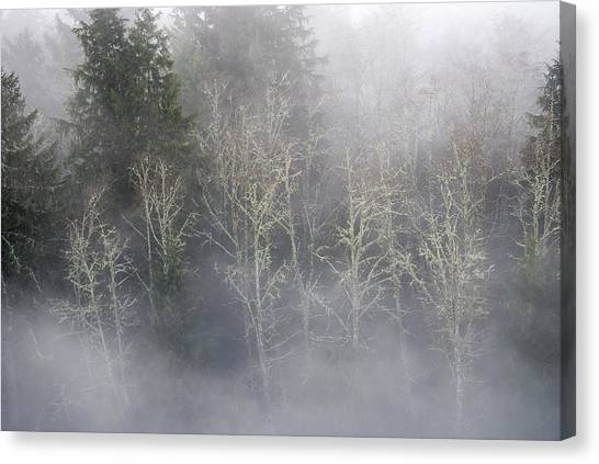 Foggy Alders In The Forest Canvas Print