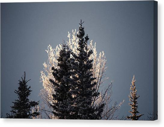 Canvas Print featuring the photograph Foggy Days And Foggy Nights by Fred Denner