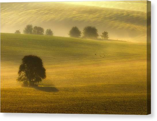 Foggy Fields Canvas Print by Piotr Krol (bax)
