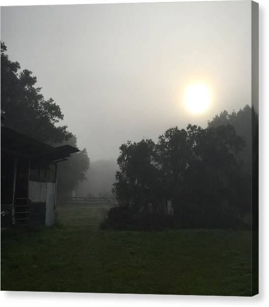 Foggy Forests Canvas Print - Foggy Florida Morning At The Nursery by Jessica O'Toole