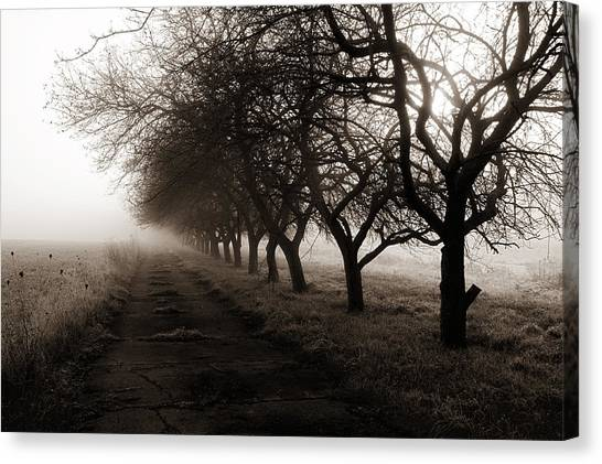 Foggy Lane Canvas Print