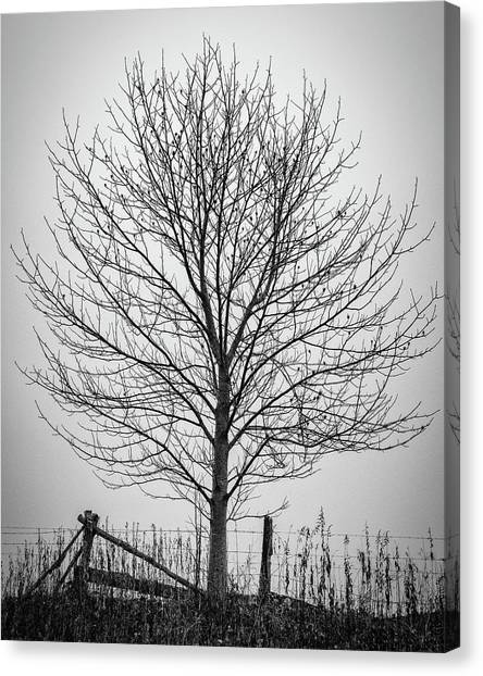 Foggy Lone Tree Hill Fine Art Canvas Print