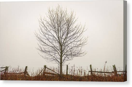 Foggy Lone Tree Hill Canvas Print