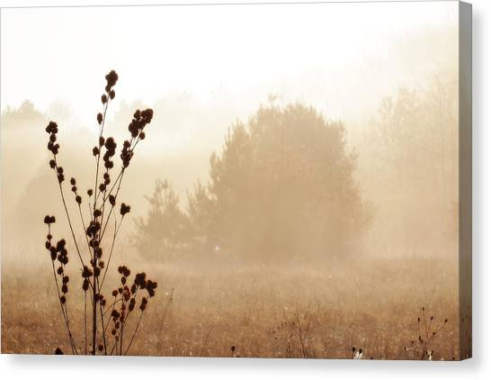 Canvas Print featuring the photograph Foggy Meadow 2 by Scott Hovind