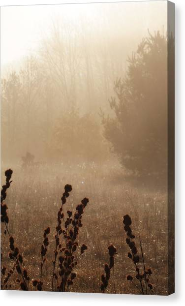 Canvas Print featuring the photograph Foggy Meadow by Scott Hovind