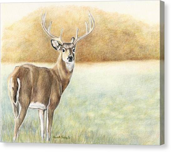 Foggy Morning Buck Canvas Print by Charlotte Yealey