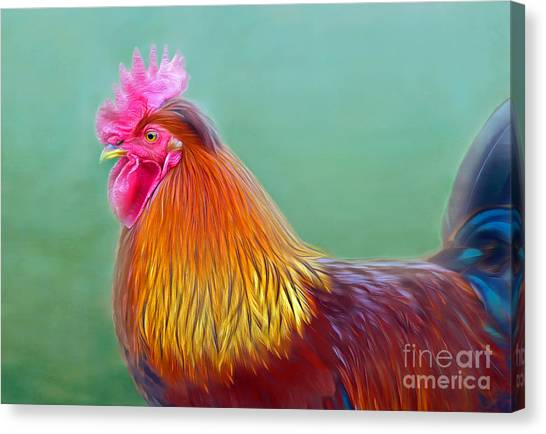 Foggy Morning Rooster Canvas Print
