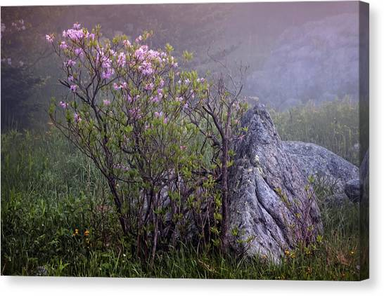 Foggy Pink Azalea Canvas Print
