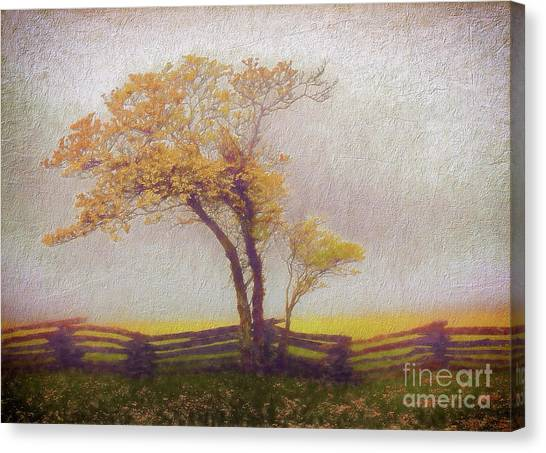 Groundhogs Canvas Print - Foggy Tree And Fence In The Blue Ridge Ap by Dan Carmichael