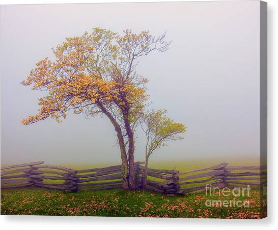 Groundhogs Canvas Print - Foggy Tree And Fence In The Blue Ridge by Dan Carmichael